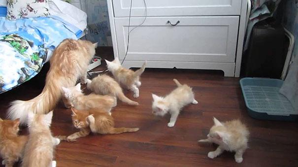 Γάτα τρομοκρατεί κατά λάθος τα μικρά της
