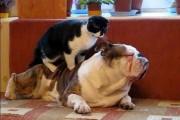 Γάτες κάνουν μασάζ σε σκύλους