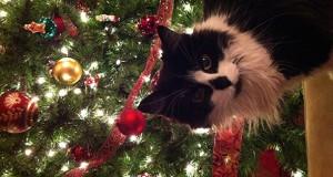 Γάτες εναντίον χριστουγεννιάτικων στολισμών (Video)