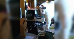Γάτες που απολαμβάνουν να κάνουν επίτηδες ζημιές (Video)