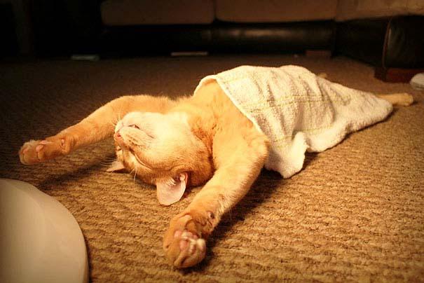 30 γάτες που κοιμούνται όπου και όπως τους έρθει (1)