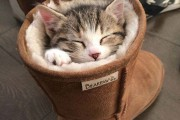 30 γάτες που κοιμούνται όπου και όπως τους έρθει (6)