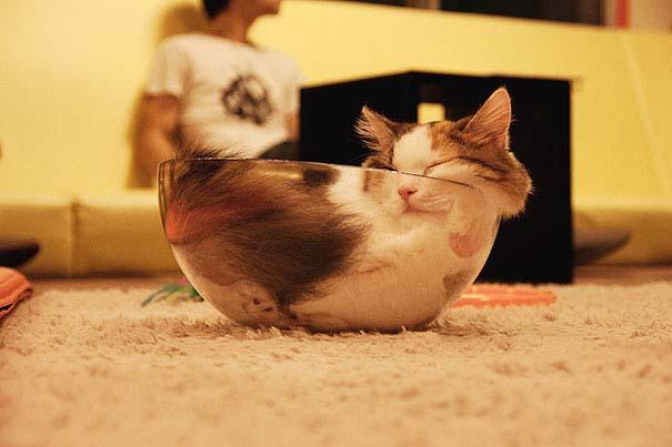 30 γάτες που κοιμούνται όπου και όπως τους έρθει (8)