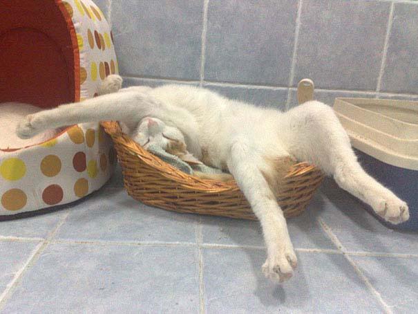 30 γάτες που κοιμούνται όπου και όπως τους έρθει (10)