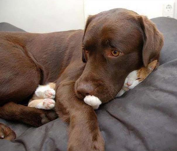 30 γάτες που κοιμούνται όπου και όπως τους έρθει (14)