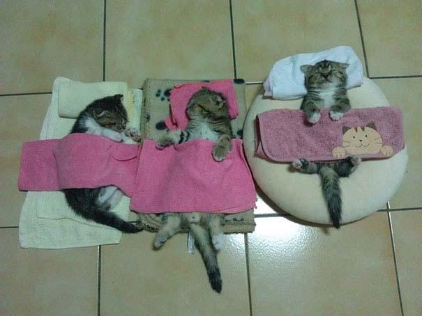 30 γάτες που κοιμούνται όπου και όπως τους έρθει (16)