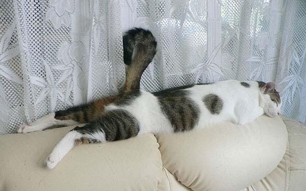 30 γάτες που κοιμούνται όπου και όπως τους έρθει (18)