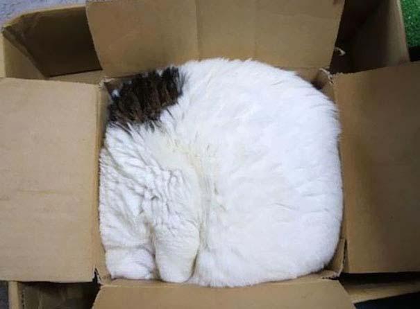 30 γάτες που κοιμούνται όπου και όπως τους έρθει (19)