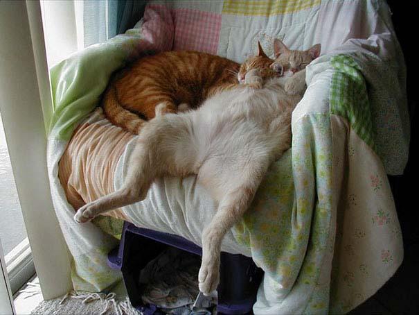 30 γάτες που κοιμούνται όπου και όπως τους έρθει (20)