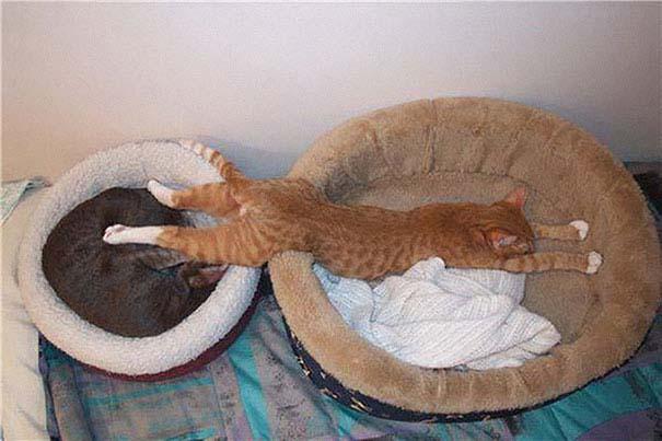 30 γάτες που κοιμούνται όπου και όπως τους έρθει (26)
