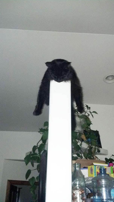 30 γάτες που κοιμούνται όπου και όπως τους έρθει (29)