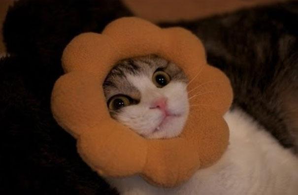 Γάτες που κόλλησαν