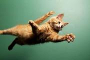 Γάτες σε απίστευτα άλματα