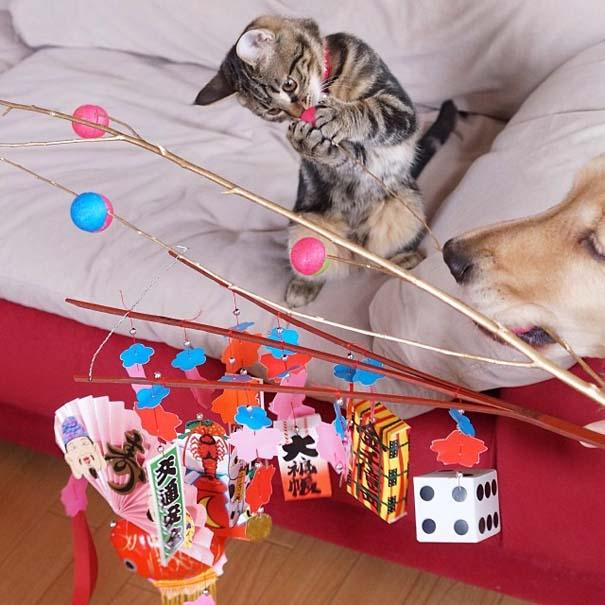 Golden retriever υιοθέτησε ορφανό γατάκι (14)