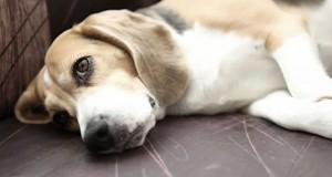 Το ημερολόγιο ενός δυστυχισμένου σκύλου (Video)