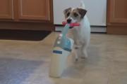 Jesse: Ένας σκύλος για όλες τις δουλειές
