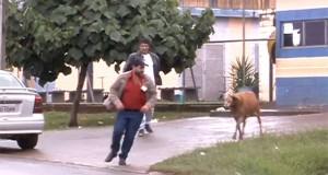 Κριάρι τρομοκρατεί τους κατοίκους σε γειτονιά της Βραζιλίας (Video)