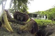 Καβούρι κλέβει κάμερα