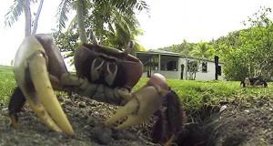 Καβούρι κλέβει κάμερα που κατέγραφε την δραστηριότητα του (Video)