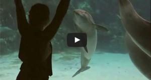 Κορίτσι ψυχαγωγεί τα δελφίνια με… γυμναστικές επιδείξεις (Video)