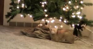 Η κρυφή επίθεση μιας γάτας στο χριστουγεννιάτικο δέντρο (Video)