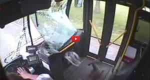 Λεωφορείο χτύπησε ελάφι με πολύ απρόσμενη κατάληξη (Video)