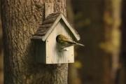 Μέσα στο σπιτάκι ενός πουλιού...