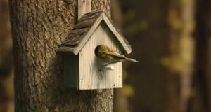 Μέσα στο σπιτάκι ενός πουλιού… (Video)