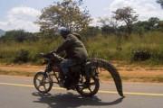 Μόνο στην Αφρική (1)