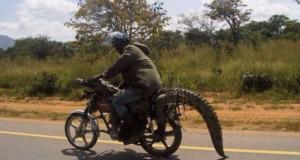 Μόνο στην Αφρική #2