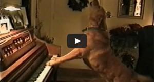 Οι… μουσικοί του ζωικού βασιλείου (Video)