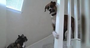 Όταν οι σκύλοι τρέμουν τη γάτα του σπιτιού (Video)
