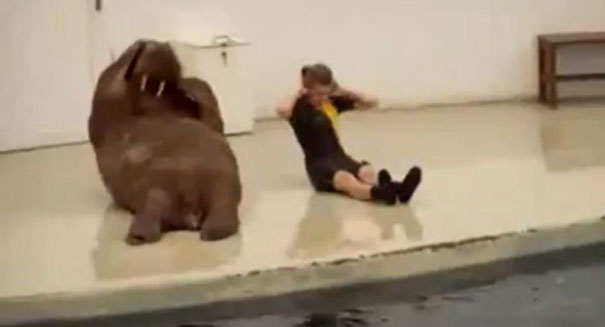 Όταν τα ζώα γυμνάζονται