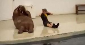 Όταν τα ζώα γυμνάζονται (Video)