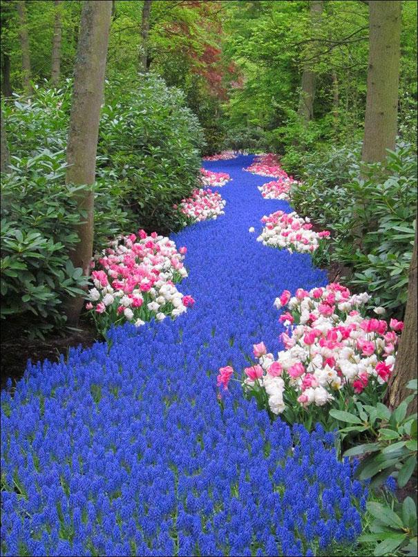 Ποτάμι από λουλούδια στην Ολλανδία | Φωτογραφία της ημέρας