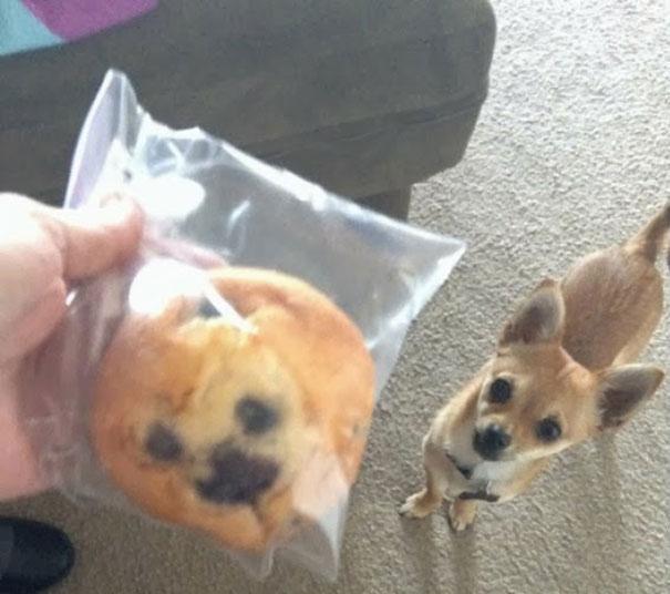 Τι κοινό μπορεί να έχουν ένα μπισκότο και ένας σκύλος | Φωτογραφία της ημέρας