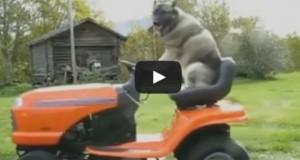 Τα πιο απίθανα ζώα (Video)