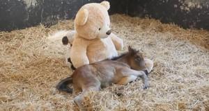 Τα πιο χαριτωμένα ζώα του 2013 (Video)