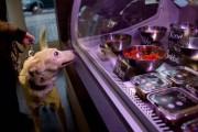 Το πρώτο εστιατόριο για σκύλους και γάτες (1)