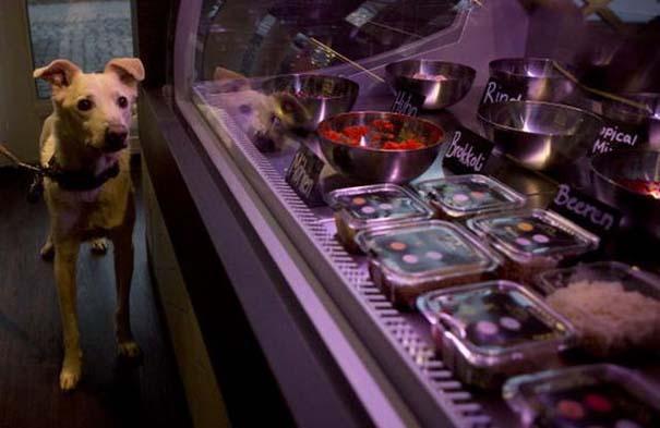 Το πρώτο εστιατόριο για σκύλους και γάτες (5)