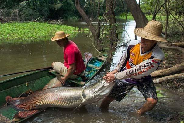 Ψάρεμα στον Αμαζόνιο (2)