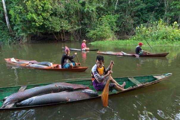 Ψάρεμα στον Αμαζόνιο (3)