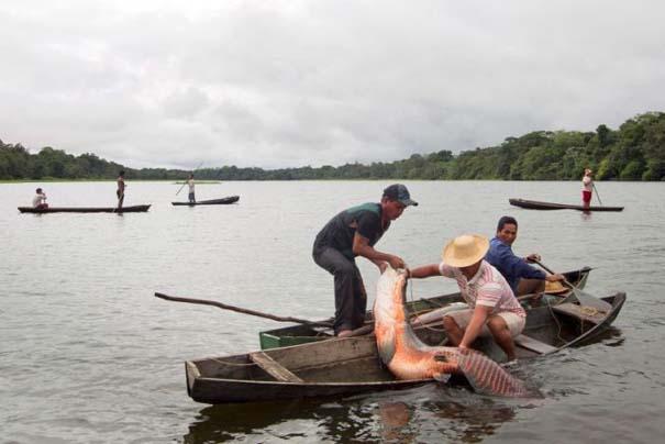 Ψάρεμα στον Αμαζόνιο (8)