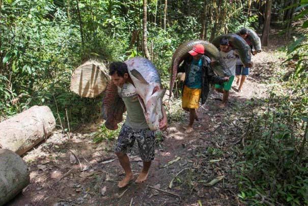 Ψάρεμα στον Αμαζόνιο (11)