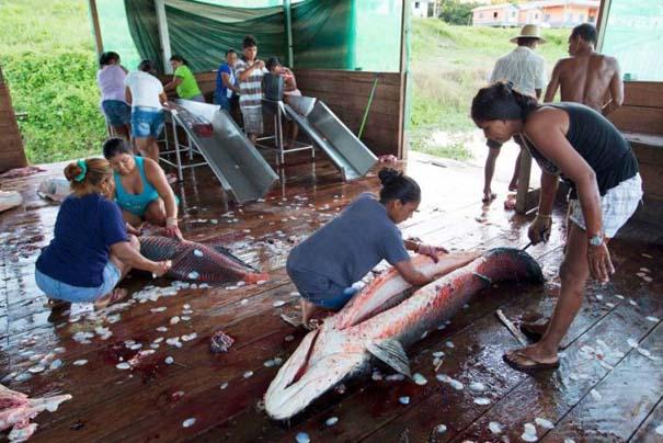 Ψάρεμα στον Αμαζόνιο (13)