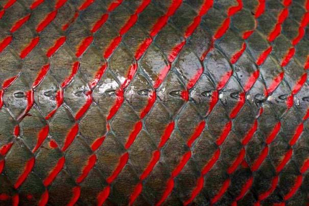 Ψάρεμα στον Αμαζόνιο (15)