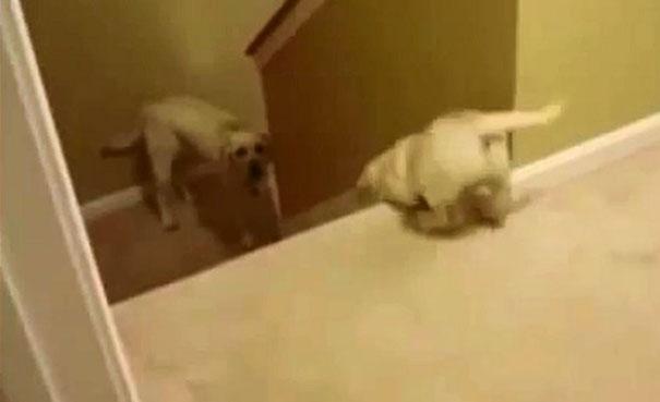 Πως μαθαίνουν οι γάτες και οι σκύλοι στα μικρά τους να κατεβαίνουν τις σκάλες