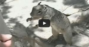 Σκίουρος παρακαλάει για τροφή με ακαταμάχητο τρόπο (Video)