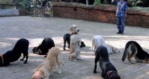 5 ξεκαρδιστικά βιντεάκια με σκύλους
