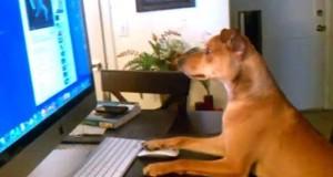 Σκύλοι που φέρονται σαν άνθρωποι (Video)